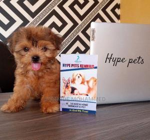 0-1 Month Female Purebred Lhasa Apso | Dogs & Puppies for sale in Ogun State, Ado-Odo/Ota