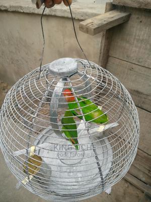 Lovebird Pet Parrot | Birds for sale in Lagos State, Ajah