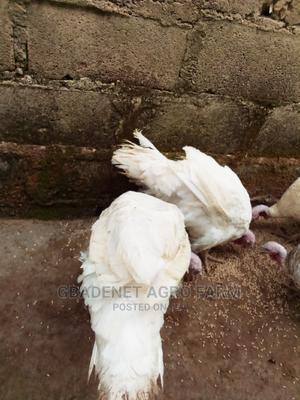 Brelia Turkeys | Livestock & Poultry for sale in Osun State, Osogbo