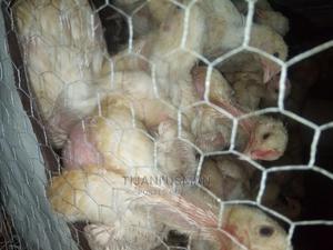 Broiler Bird | Livestock & Poultry for sale in Lagos State, Ojo