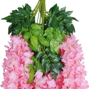 Peach Exotic Wisteria Flower   Garden for sale in Lagos State, Ikeja