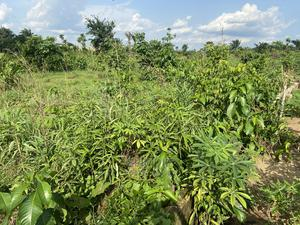A Plot of Land | Land & Plots For Sale for sale in Akwa Ibom State, Ibesikpo Asutan