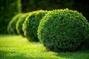 Horticulture and Gardening Services | Landscaping & Gardening Services for sale in Lagos State, Abule Egba
