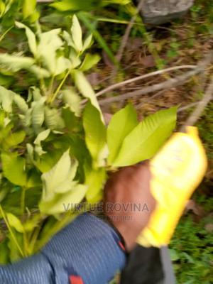 A Residential Land for Sale | Land & Plots For Sale for sale in Delta State, Ugheli
