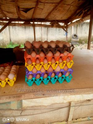 Poultry Eggs   Livestock & Poultry for sale in Abuja (FCT) State, Lokogoma