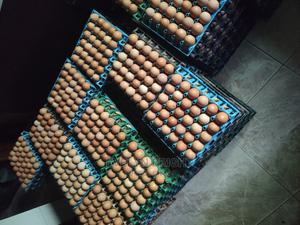 Fresh Farm Eggs for Sale | Meals & Drinks for sale in Lagos State, Isolo
