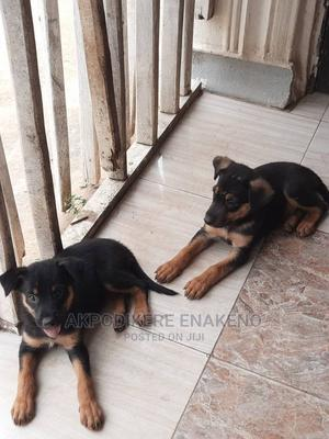 1-3 Month Female Mixed Breed German Shepherd | Dogs & Puppies for sale in Lagos State, Ojo