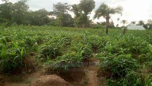 Affordable Plot of Land for Sale at Okwuanyionu Abakaliki   Land & Plots For Sale for sale in Ebonyi State, Abakaliki