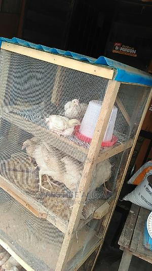 Chicken For Sell   Livestock & Poultry for sale in Lagos State, Alimosho