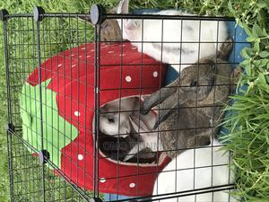 Rabbits for Sale | Other Animals for sale in Lagos State, Alimosho
