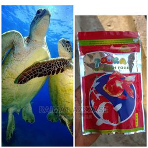 Turtle and Feed | Reptiles for sale in Lagos State, Surulere