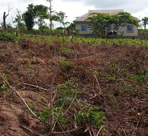 Certificate of Occupancy | Land & Plots For Sale for sale in Ogun State, Ifo