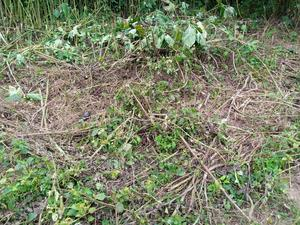 Two Plots of Land Very Close to Orisun Estate, Akoda Ede | Land & Plots For Sale for sale in Osun State, Osogbo