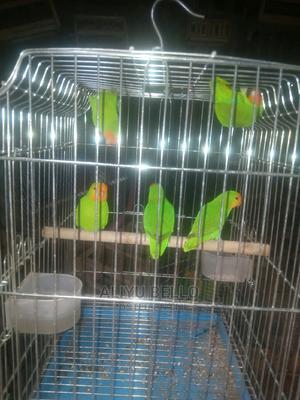 Exotic Parrot | Birds for sale in Kaduna State, Kaduna / Kaduna State