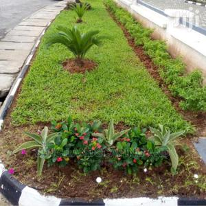 Garden Construction, Maintenance and Fumigation Services | Landscaping & Gardening Services for sale in Lagos State, Victoria Island