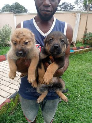1-3 month Male Mixed Breed Caucasian Shepherd | Dogs & Puppies for sale in Enugu State, Nsukka