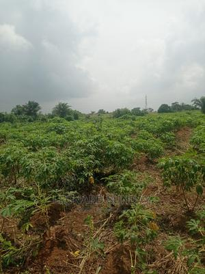Standard Acres Of Dry land For Sale At Amuowo Odofin   Land & Plots For Sale for sale in Lagos State, Amuwo-Odofin
