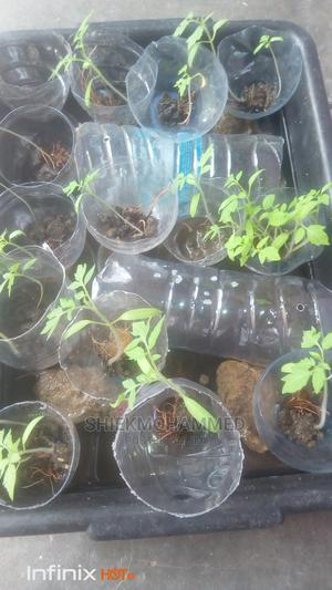 Fish Tanks And Vegetables | Farm Machinery & Equipment for sale in Abuja (FCT) State, Kubwa