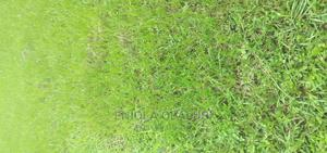 One Plot of Land   Land & Plots For Sale for sale in Ondo State, Akure