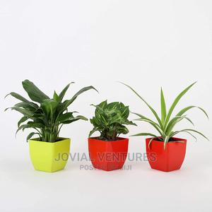 Plant Outdoor | Landscaping & Gardening Services for sale in Lagos State, Ikorodu