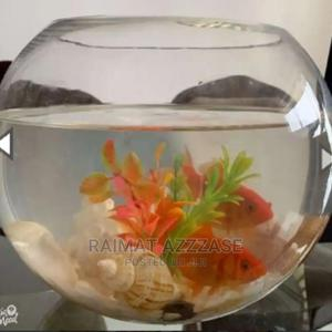 Bowl Up Fish Kit   Fish for sale in Lagos State, Maryland