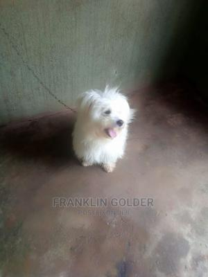 3-6 Month Male Mixed Breed Dog   Dogs & Puppies for sale in Abia State, Umuahia