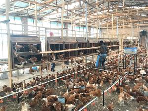 Livestock Supervisor wanted | Farming & Veterinary Jobs for sale in Nasarawa State, Karu-Nasarawa