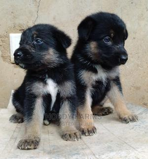 0-1 Month Female Purebred German Shepherd   Dogs & Puppies for sale in Ogun State, Abeokuta South
