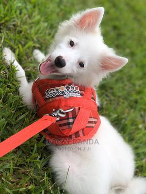 Dog Harness   Pet's Accessories for sale in Rivers State, Port-Harcourt