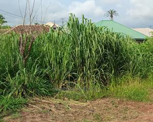 Land for Sale, 120 by 70ft   Land & Plots For Sale for sale in Delta State, Ika North East