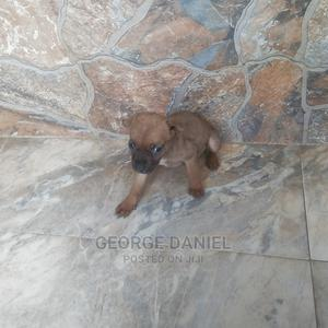 0-1 Month Female Mixed Breed Dog | Dogs & Puppies for sale in Abuja (FCT) State, Kuje