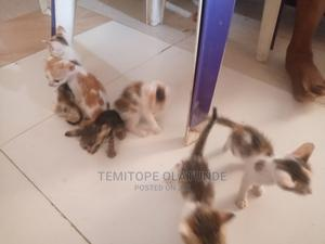 0-1 Month Female Mixed Breed Persian | Cats & Kittens for sale in Lagos State, Ojota