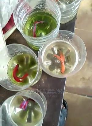 Aquarium Siamese Fighter Fish | Fish for sale in Lagos State, Surulere