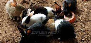 Dutch Rabbit | Other Animals for sale in Rivers State, Port-Harcourt