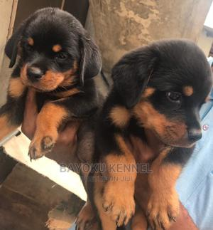 1-3 Month Male Purebred Rottweiler | Dogs & Puppies for sale in Edo State, Benin City