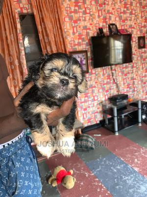 1-3 Month Female Purebred Lhasa Apso | Dogs & Puppies for sale in Lagos State, Amuwo-Odofin