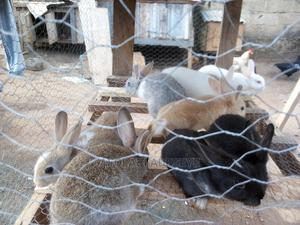 Emperor Rabbit Farm | Other Animals for sale in Ondo State, Akure