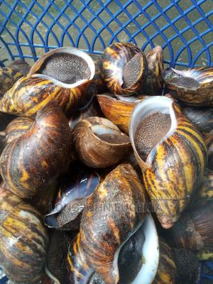 Native Snails | Meals & Drinks for sale in Abia State, Umuahia