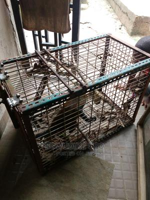 Monkey for Sale   Other Animals for sale in Lagos State, Ikorodu