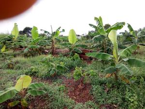 Plots Of Land For Sale | Land & Plots For Sale for sale in Ogun State, Ewekoro