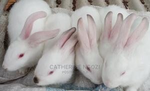 Healthdelights21 | Other Animals for sale in Ogun State, Ifo