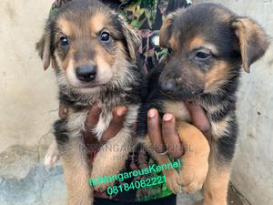 0-1 Month Female Purebred German Shepherd   Dogs & Puppies for sale in Oyo State, Ibadan