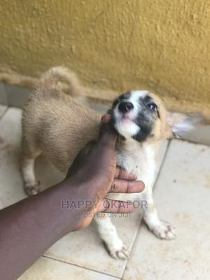 1-3 Month Female Mixed Breed German Shepherd | Dogs & Puppies for sale in Lagos State, Alimosho