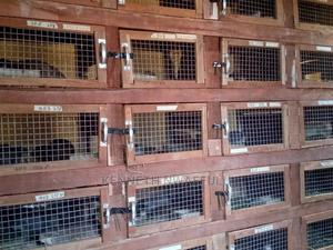 Farm Manager | Livestock & Poultry for sale in Delta State, Aniocha South