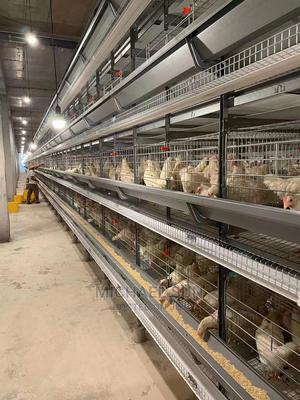 Best Quality Battery Cage | Farm Machinery & Equipment for sale in Lagos State, Orile