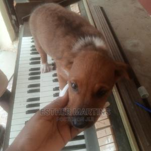1-3 Month Female Mixed Breed Dog | Dogs & Puppies for sale in Lagos State, Ikorodu