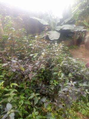 Land for Sale   Land & Plots For Sale for sale in Akwa Ibom State, Uyo