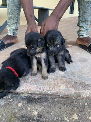 0-1 Month Female Mixed Breed German Shepherd | Dogs & Puppies for sale in Anambra State, Awka