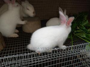 Pet Rabbits for Sale   Livestock & Poultry for sale in Ogun State, Ado-Odo/Ota