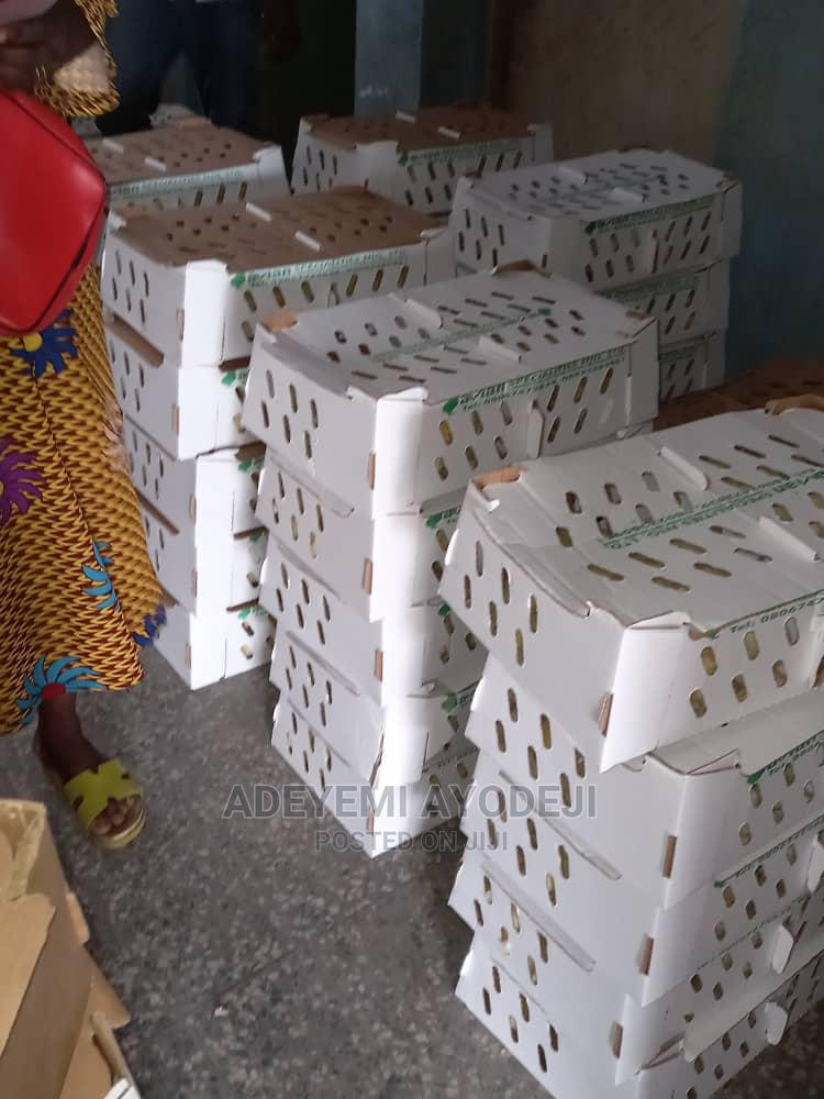 Day Old Chicks And Point Of Lay For Sale   Livestock & Poultry for sale in Oluyole, Oyo State, Nigeria